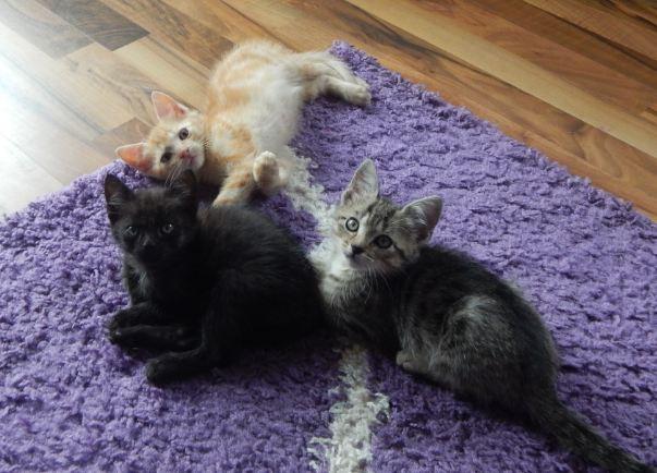3 Katzen auf Fußboden