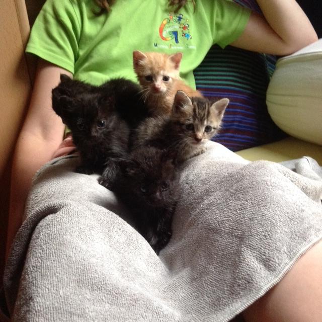 Katzen auf dem Schoß