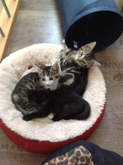 Katzen in Korb