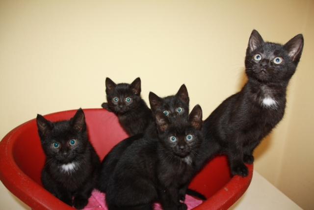 5 Fundkatzen