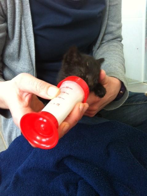 schwarze Katze mit Nuckelflasche II