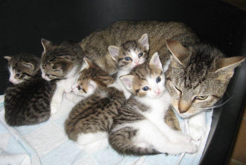 Katzenfamilie1