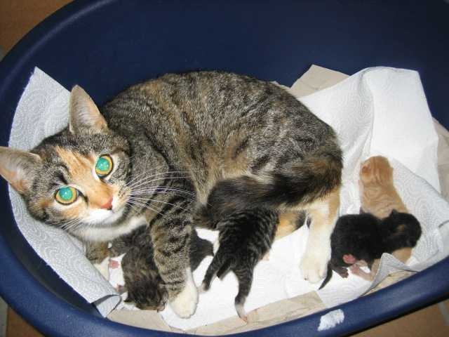 Katzenmutter mit Welpen